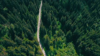 Forest path road drone view