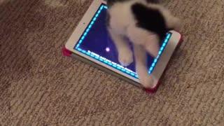 Cat video game