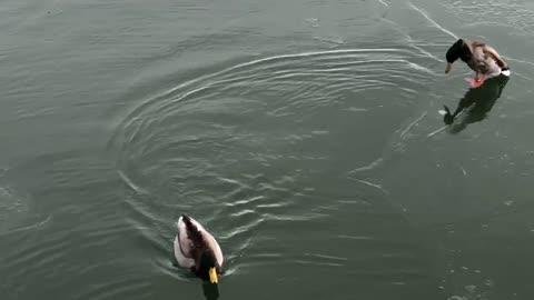 Beautiful swimming on lake. Winter time snowing