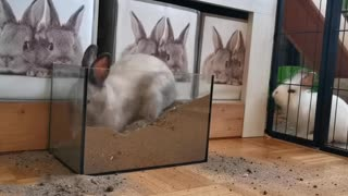 Rabbit playing with sand