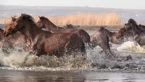 Wild Horses running slow motion 11
