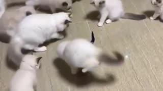 kittens and snake