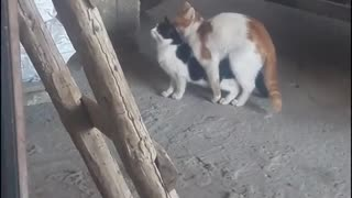 Watch the cats mate