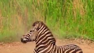 Beautiful animal's life