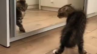 Cute cat in a mirror