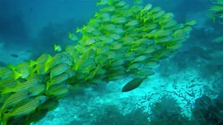 Fish Meeting