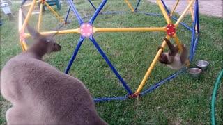 sloth sweet so sweet