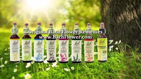 Bach Flower Remedies, How to Take them