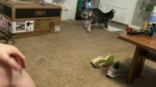 Dog Pees On Carpet After Playing With Their Owner