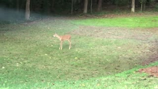 Cute! Baby deer and squirrel play