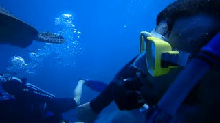 Scuba diving with a playful turtle in the great barrier reef