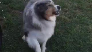 Dog biting water