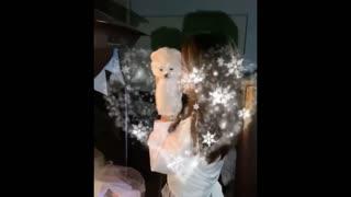 💗😍 Funny and Cute Pomeranian #14 😍 Perritos bebes lindos 🐱💗