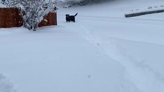 Doggo Dashes through the Snow