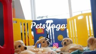 Pet Yoga Class
