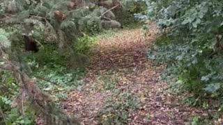 My grove in Minnesota