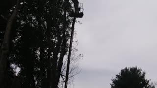 Tree removal Marion VA.