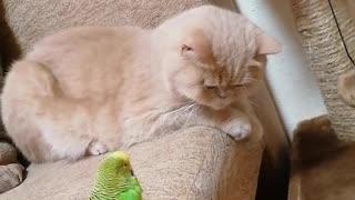 Кот и птица, милые животные #42