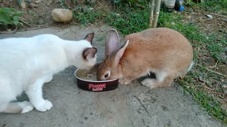Cat and Rabbit Share During Lunchtime