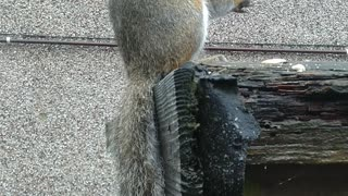 Squirrel Eating Cashews.