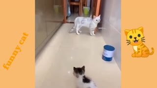 A kitten scared the cat