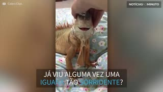 Esta iguana sorri sempre que recebe carinho
