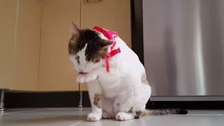 Cat funny video cat