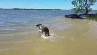 Cute & Funny Dogs having Fun TRY NOT TO LAUGH