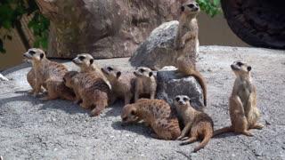 Funny animals, animals playing