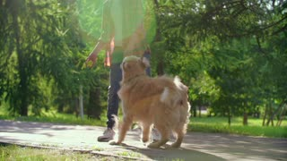 Boy Playing With His Dog 4k