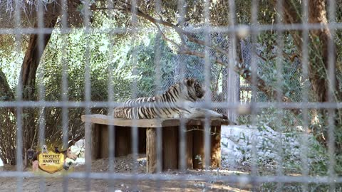 Wildlife World Zoo - Zoos Offer a Valuable Service