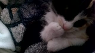 Adorable kitten Amelie remembering her baby days