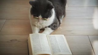 cat is reading a book attentively