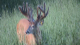 Mountain Clean Whitetails Moonshine @ 2 yrs. old