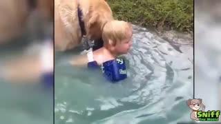 Loyal Dogs Saved People Life Compilation