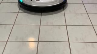 Bumper Car Keeps Baby Entertained
