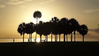 Sunrise Silhouette Palm Trees Runner Biker Bayfront St Petersburg Florida