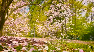 The most beautiful spring scenery, please watch