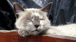 Quite Angle Kitty Sleeps Well