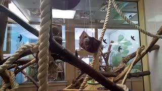 Cute little monkeys