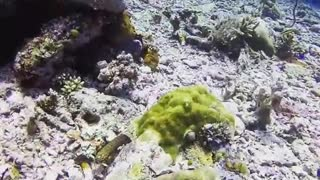Spotted Water Worms Under Water