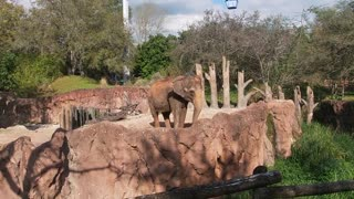 Busch Gardens FL trip Part 2