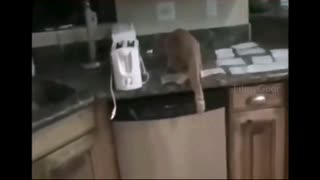 Scared cats. Funny cats. Compilation