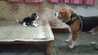 Dogs Communicating with each other