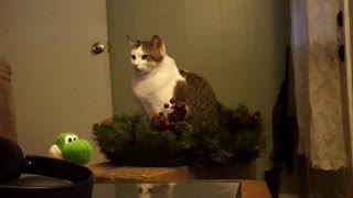 Christmas cat acting like statue