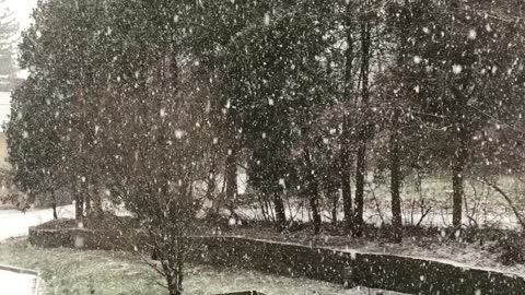 Snow Falling in January