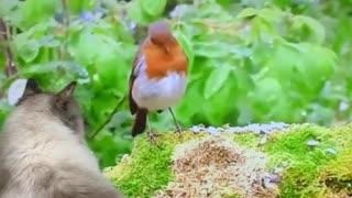 -Cat watches wildlife documentary, tries to catch bird on screen-