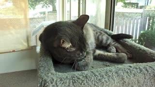 Yoda loves catnip ball
