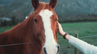 A cute horse with a tender girlfriend