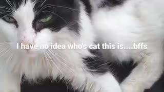 Mystery Cat